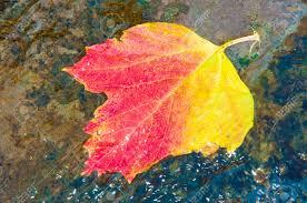 leafstream