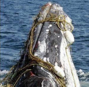 whalehand2